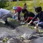 ソーラーシェアリング市民農園にサツマイモ植え付けました